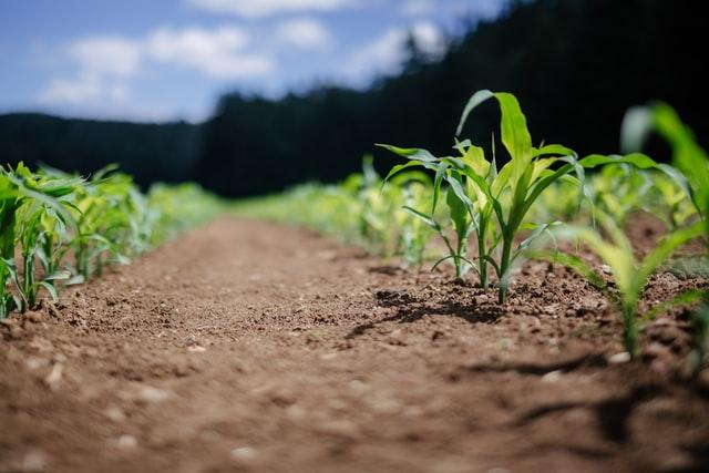 Mające odpowiednie właściwości preparaty do roślin
