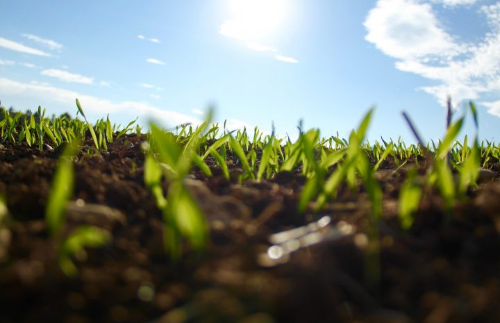 Jak selekcjonować preparaty rolnicze?